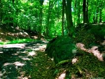 A Green Blue Mountain Reservation Summer-1117