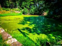 A Green Blue Mountain Reservation Summer-1239