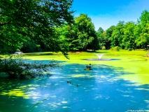 A Green Blue Mountain Reservation Summer-1240