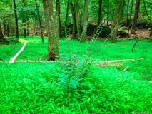 A Green Blue Mountain Reservation Summer-1409