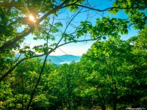 A-Green-Blue-Mountain-Reservation-Summer-1508