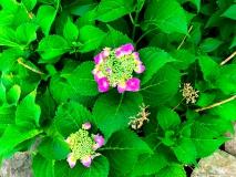 A Green Blue Mountain Reservation Summer--20