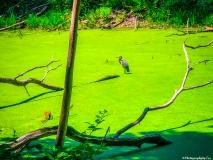 A Green Blue Mountain Reservation Summer--25