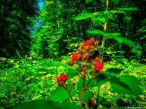 A Green Blue Mountain Reservation Summer--27