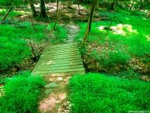 A Green Blue Mountain Reservation Summer--30