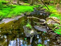 A Green Blue Mountain Reservation Summer--4
