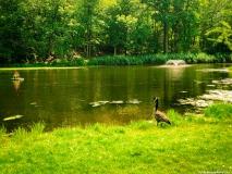 A Green Blue Mountain Reservation Summer--40