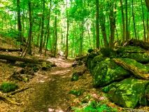 A Green Blue Mountain Reservation Summer--45