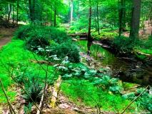 A Green Blue Mountain Reservation Summer--6