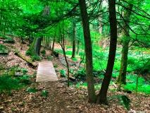 A Green Blue Mountain Reservation Summer--7