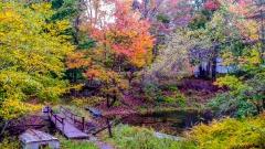 Pond near Monticello NY #1