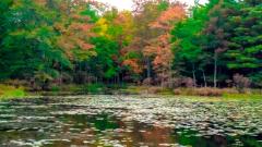 Lake near Monticello NY #20