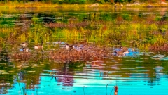 Lake near Monticello NY #17