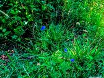 A-Green-Blue-Mountain-Reservation-Summer-1247