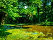 A-Green-Blue-Mountain-Reservation-Summer-23