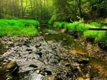 A-Green-Blue-Mountain-Reservation-Summer-2404