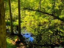 A-Green-Blue-Mountain-Reservation-Summer-10