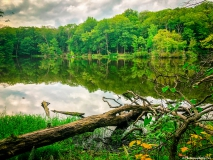 A-Green-Blue-Mountain-Reservation-Summer-2396
