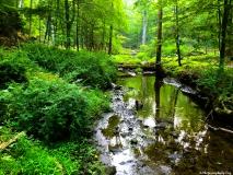 A-Green-Blue-Mountain-Reservation-Summer-3